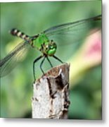 Dragonfly In The Flower Garden Metal Print