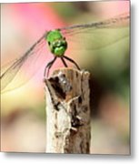 Dragonfly In The Petunias Metal Print
