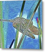 dragonfly Interior Metal Print
