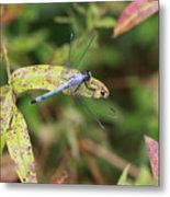 Dragonfly Leaf Metal Print