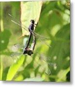 Dragonfly Love Metal Print