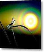 Dragonfly Of Color Metal Print