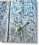 Dragonfly On A Bench Metal Print