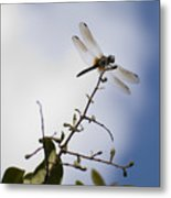 Dragonfly On A Limb Metal Print
