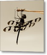 Dragonfly On A Pine Needle Metal Print