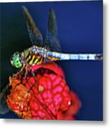 Dragonfly On A Pitcher Plant 009 Metal Print