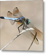 Dragonfly On Bent Reed Metal Print