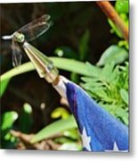 Dragonfly On Flag Metal Print