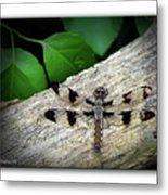 Dragonfly On Log Metal Print