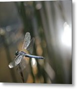 Dragonfly On Reed Metal Print