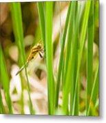 Dragonfly On Reed Leaf Metal Print