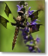 Dragonfly On Salvia Metal Print