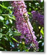Dragonfly On The Butterfly Bush Metal Print