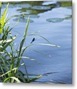 Dragonfly On The Lake Metal Print