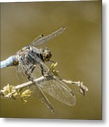 Dragonfly On The Spot Metal Print