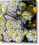 Dragonfly On White Mums Metal Print