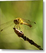 Dragonfly Perched Metal Print