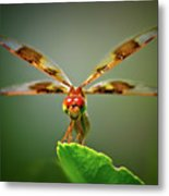 Dragonfly Pitstop Metal Print