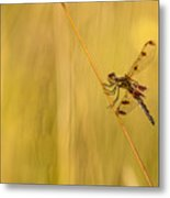 Dragonfly Pole Dance Metal Print