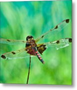 Dragonfly Rear Approach Metal Print