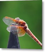 Dragonfly Red Metal Print