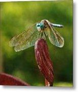 Dragonfly Resting II Metal Print