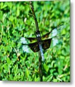 Dragonfly Resting On Stem Metal Print