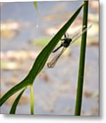 Dragonfly Resting Upside Down Metal Print