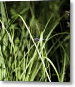 Dragonfly Two Or  One Metal Print