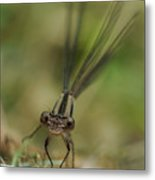 Dragonfly Up Close Metal Print