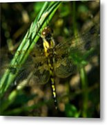 Dragonfly Venation Revealed Metal Print