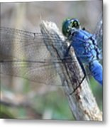 Dragonfly Wing Detail Metal Print