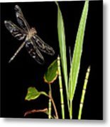 Dragonfly Wings Metal Print