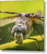 Dragonfly Wiping Its Eyes Metal Print