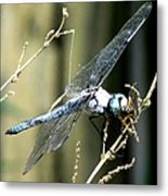 Dragonfly With Yellowjacket 1 Metal Print