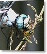 Dragonfly With Yellowjacket 3 Metal Print