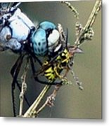 Dragonfly With Yellowjacket 4 Metal Print