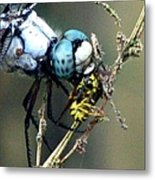 Dragonfly With Yellowjacket 5 Metal Print