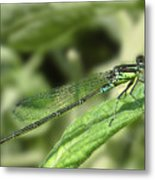 Dragonfly1 Metal Print by Svetlana Sewell