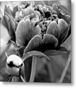 Drama In The Garden Metal Print