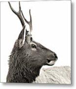 Dramatic Deer Metal Print