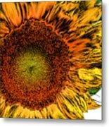 Dramatic Sunflower Metal Print