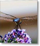 Drangonfly On A Purple Flower Metal Print
