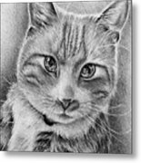 Drawing Of A Cat In Black And White Metal Print