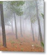 Dream Forest II. Living In A Dream... Metal Print