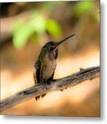 Dream Hummingbird Metal Print