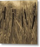 Dreaming Of Cattails Metal Print