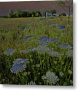 Dreaming Of Queen Annes Lace Metal Print