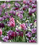 Dreaming Of Tulips Metal Print