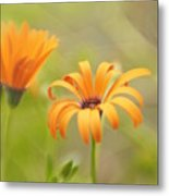 Dreams Of Orange Symphony In Spring 2 Metal Print